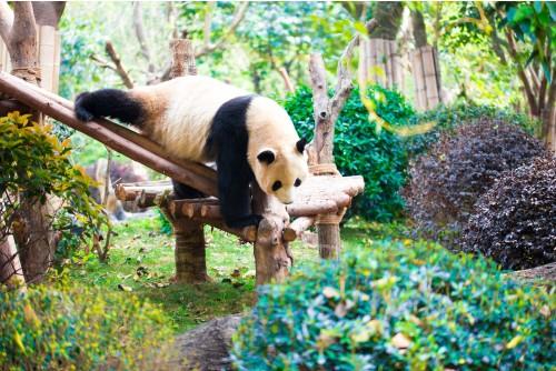 Chengdu Research Base of Giant Panda