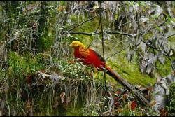 Birds of Tangjiahe