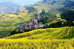 Dragon's Backbone Rice Terraces, Guilin