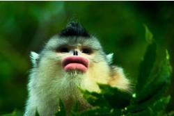 Yunnan Snub-Nosed Monkey Nature Reserve, Tacheng