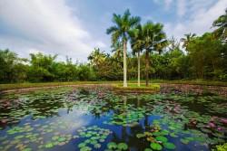 Xishuangbanna Tropical Batanical Garden