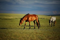 Hohhot Xilamuren Grassland